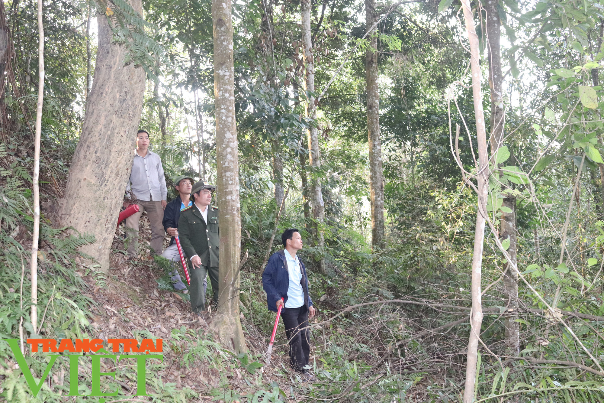 Ban Quản lý rừng đặc dụng – phòng hộ Thuận Châu: Chủ động PCCCR mùa hanh khô - Ảnh 4.