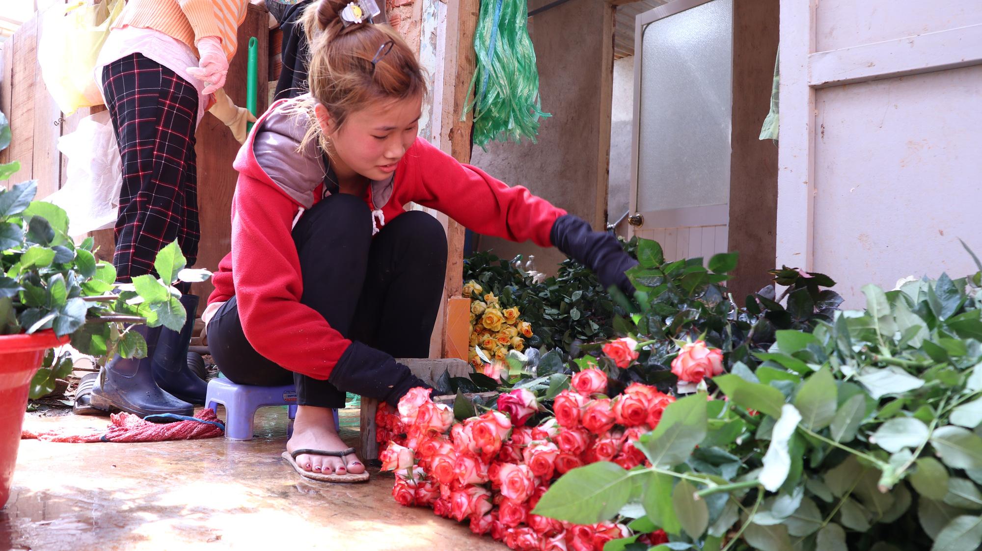 """Người dân phấn khởi thu hoạch hoa hồng cận ngày Quốc tế Phụ nữ, """"vớt vát"""" mùa Covid-19 - Ảnh 6."""