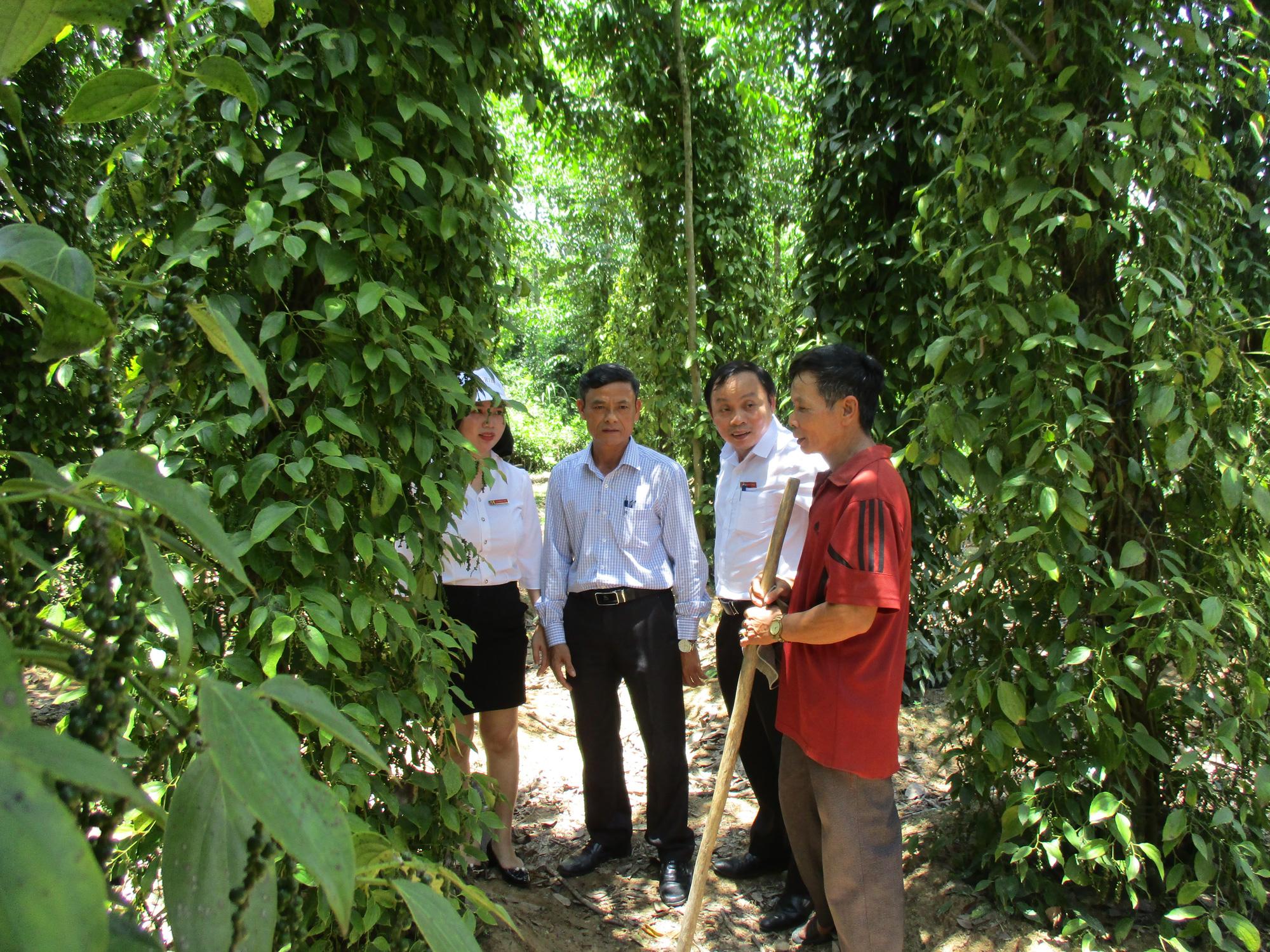 Quảng Nam: Tiên Mỹ đạt chuẩn Nông thôn mới, người dân thu nhập tăng gấp 3 lần  - Ảnh 2.