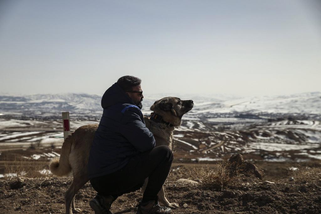"""Giống chó được mệnh danh là """"kẻ giết sói"""" - Ảnh 6."""