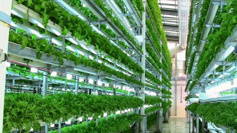 """4 công nghệ nông nghiệp """"thần kỳ"""" làm thay đổi tương lai của toàn nhân loại - Ảnh 3."""