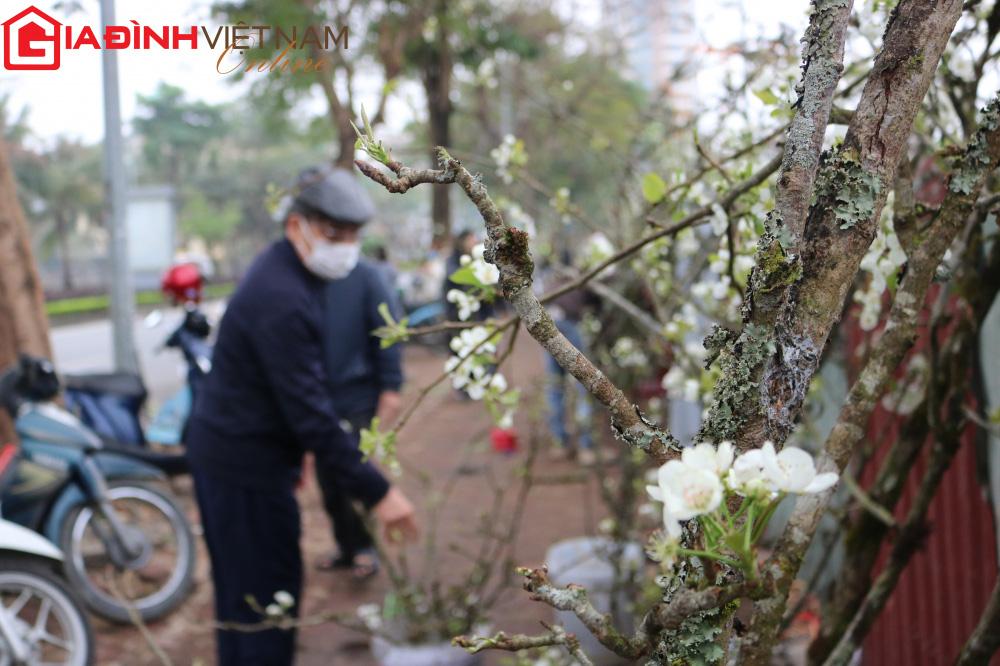 Người dân Hà Nội chen chân mua loài hoa trắng tinh khôi trưng nhà níu giữ sắc xuân - Ảnh 10.