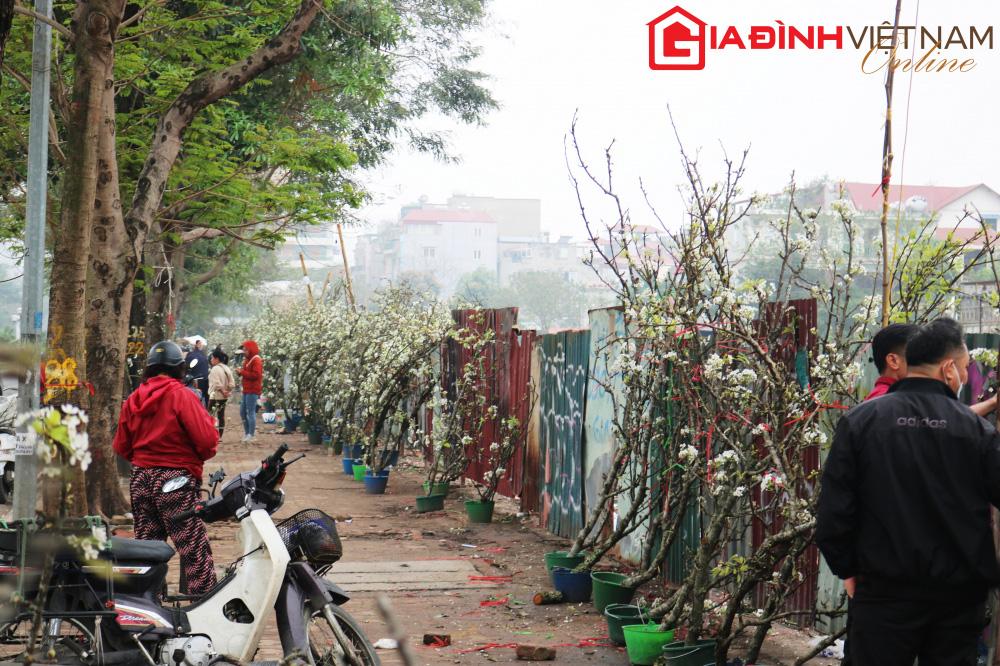 Người dân Hà Nội chen chân mua loài hoa trắng tinh khôi trưng nhà níu giữ sắc xuân - Ảnh 1.