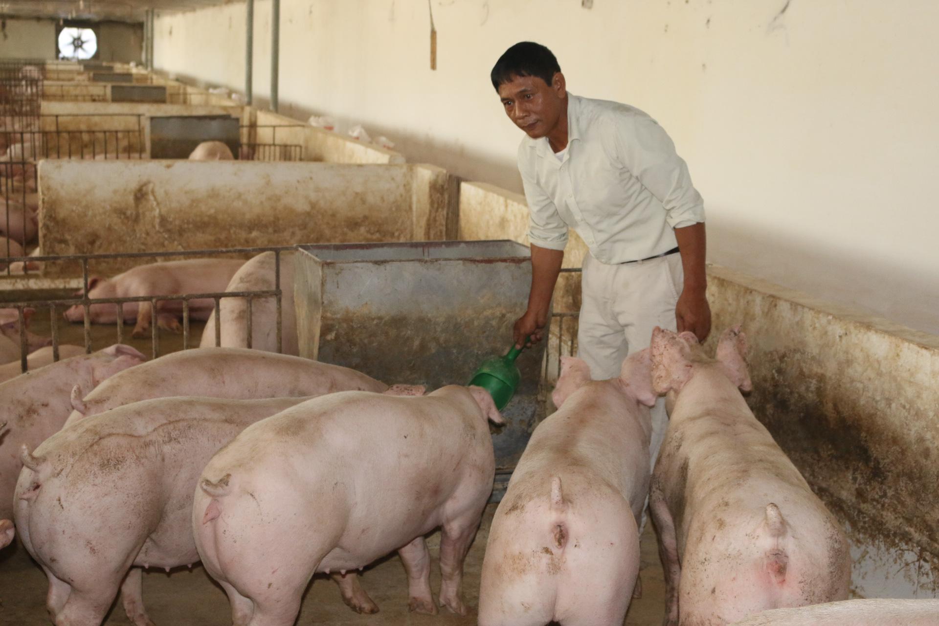 Kể chuyện làng: Dở khóc dở cười chuyện nuôi lợn thời bao cấp - Ảnh 6.