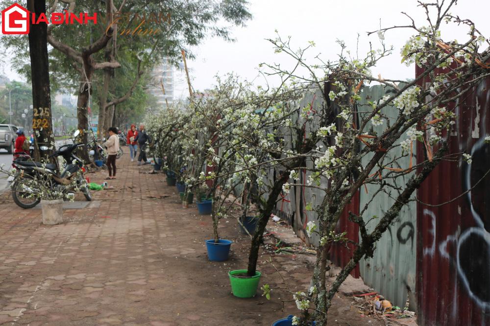 Người dân Hà Nội chen chân mua loài hoa trắng tinh khôi trưng nhà níu giữ sắc xuân - Ảnh 9.