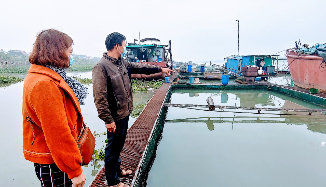 Hải Dương: Hàng chục tấn cá tồn đọng, người nuôi cá lồng Kim Lai lao đao vì Covid-19 - Ảnh 1.