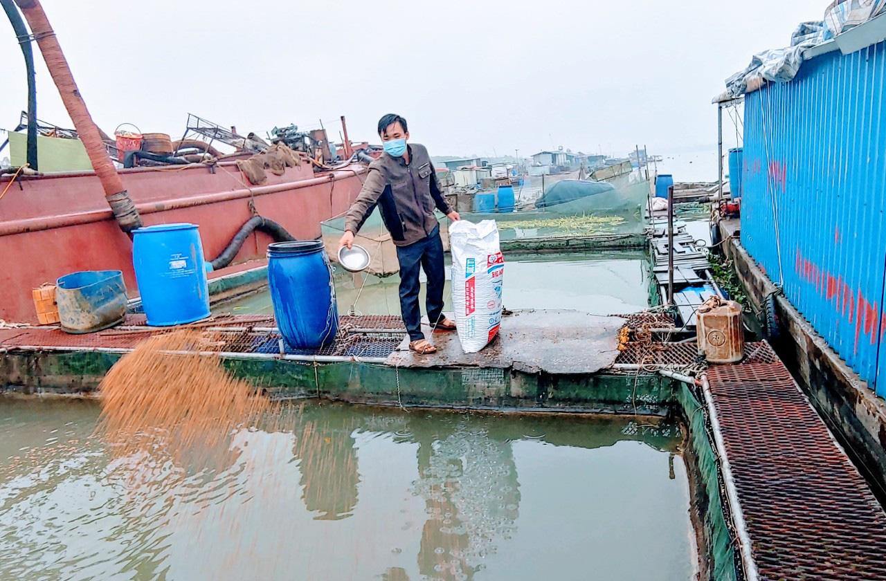 Hải Dương: Hàng chục tấn cá tồn đọng, người nuôi cá lồng Kim Lai lao đao vì Covid-19 - Ảnh 3.