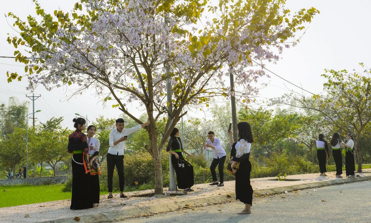 Điện Biên: Rực rỡ sắc hoa ban nở trắng núi rừng - Ảnh 4.