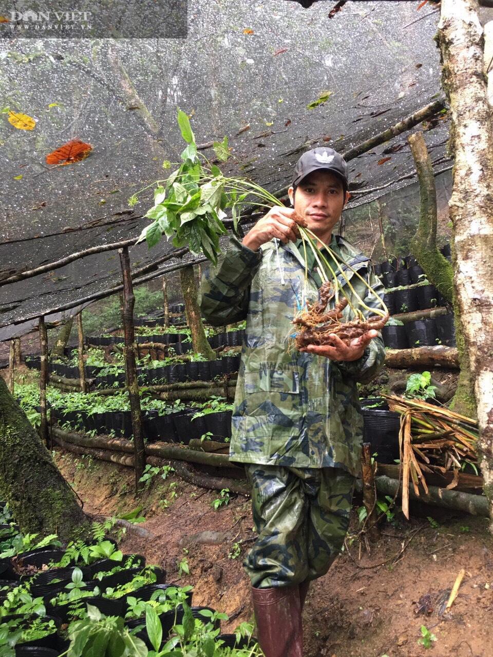 Kon Tum: Khuyến khích nông dân trồng và phát triển cây triệu đô - Ảnh 3.