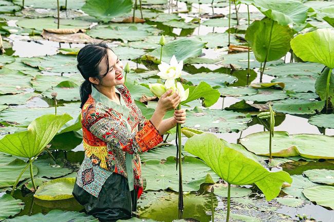 TT-Huế: Mở rộng diện tích trồng sen lên 745ha để nâng cao thu nhập cho dân - Ảnh 1.