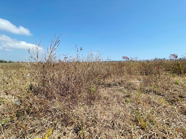 """Quảng Ngãi: Bỏ hoang diện tích """"khủng"""" nhưng nhiều dự án nông nghiệp tiếp tục trình cấp phép?   - Ảnh 4."""