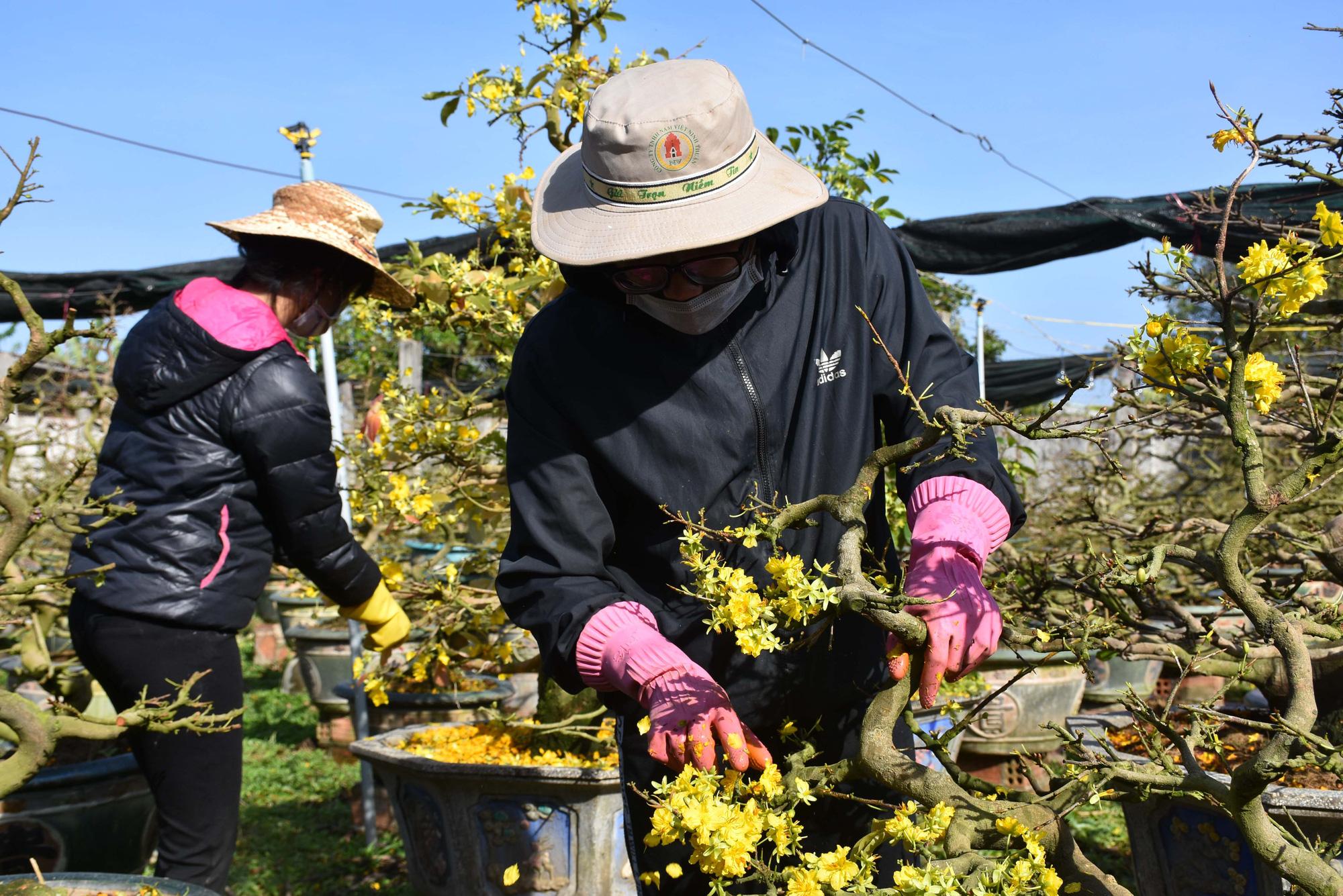Gia Lai: Tháng Giêng là tháng chăm mai, ai nhận được nhiều cây người đó kiếm bộn tiền - Ảnh 1.