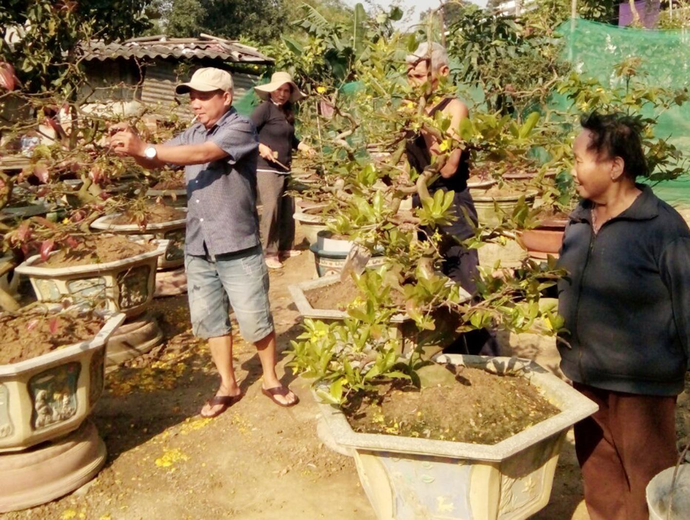 Gia Lai: Tháng Giêng là tháng chăm mai, ai nhận được nhiều cây người đó kiếm bộn tiền - Ảnh 2.