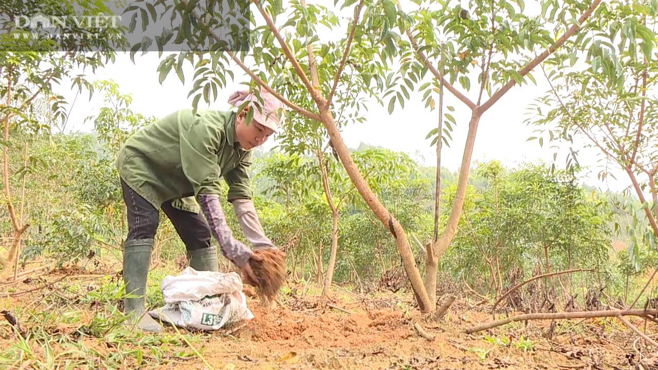 Nhiều năm giá thấp định chặt bỏ, nhựa cây này bỗng được giá, nông dân mừng rơn - Ảnh 5.