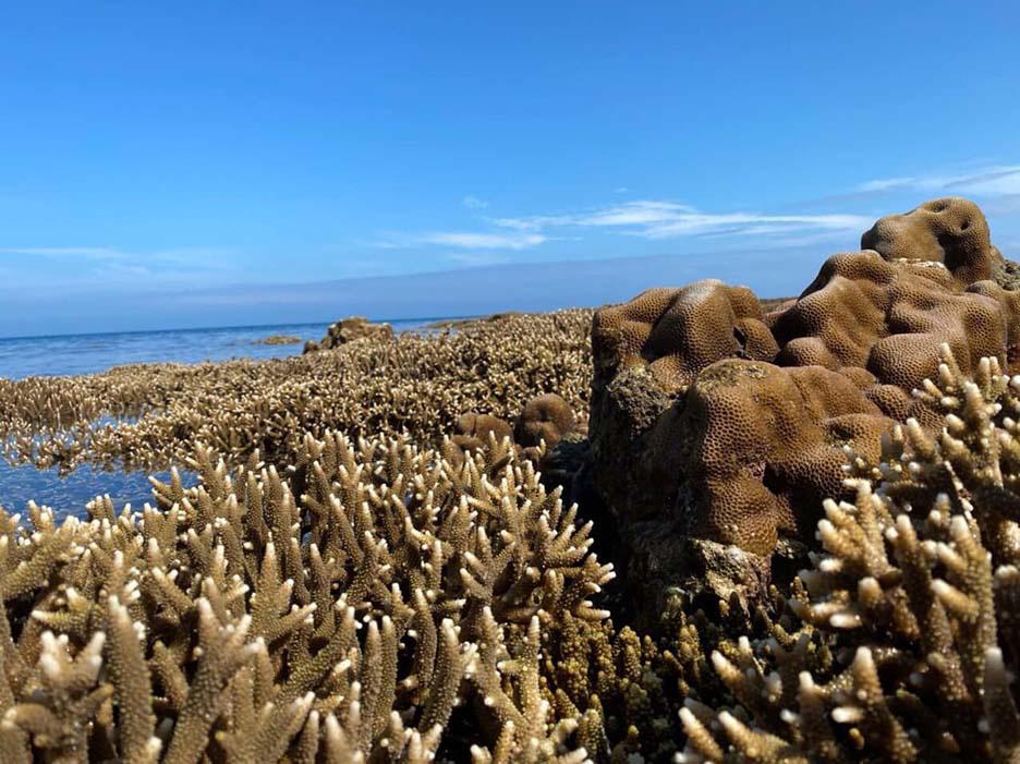 Du lịch Côn Đảo: Tất tần tật thông tin về Côn Đảo bạn không nên bỏ qua - Ảnh 10.