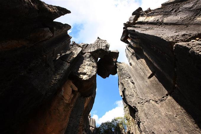 Lạc vào mê cung rừng đá 270 triệu năm tuổi - Ảnh 3.