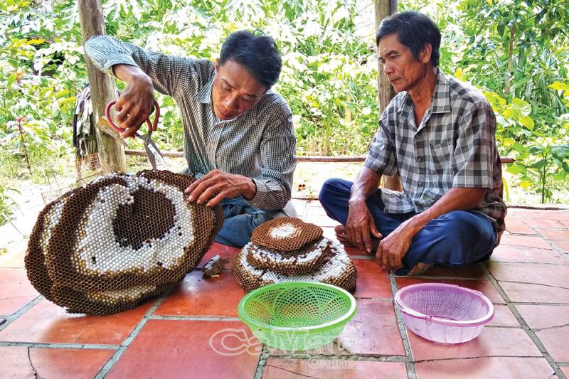 """Những dị nhân """"cả gan"""" săn hung thần ong vò vẽ - loài ong có nọc độc cực mạnh trong rừng U Minh Hạ - Ảnh 2."""