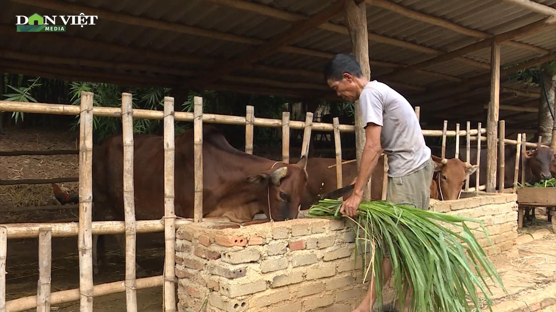 Xã vùng cao nuôi 3.000 con trâu bò, thu về trên 35 tỷ đồng mỗi năm cho người nông dân - Ảnh 2.