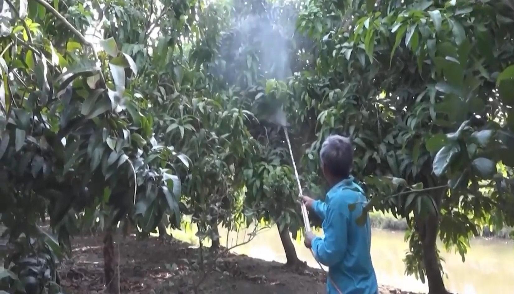 Từ vùng đất nhiễm phèn nặng, vươn lên thành thủ phủ cây ăn trái - Ảnh 3.