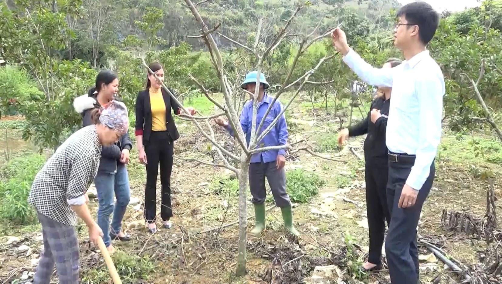 Yên Bái: Triển vọng từ mô hình trồng na ở huyện Văn Chấn - Ảnh 2.