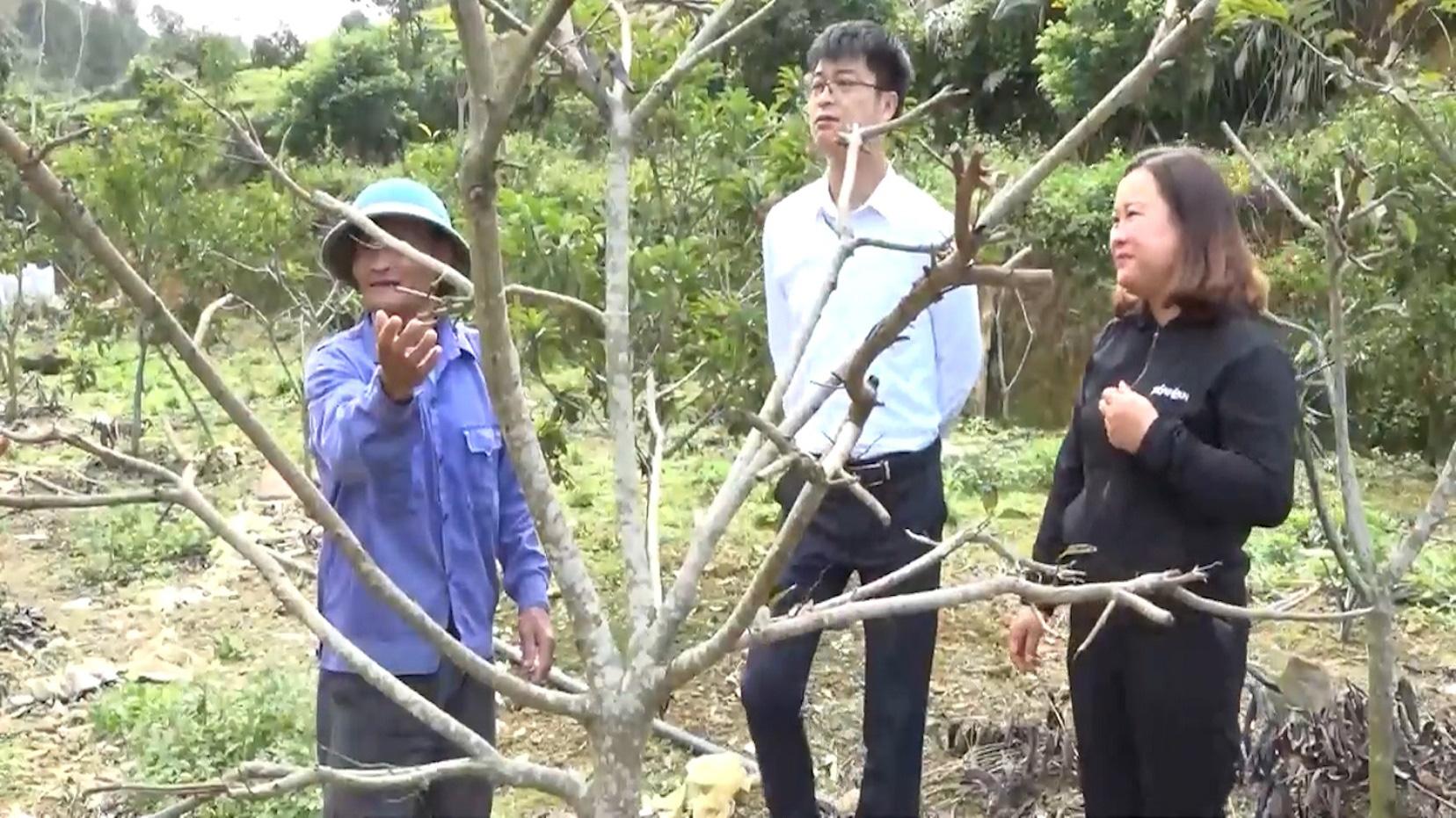 Yên Bái: Triển vọng từ mô hình trồng na ở huyện Văn Chấn - Ảnh 3.