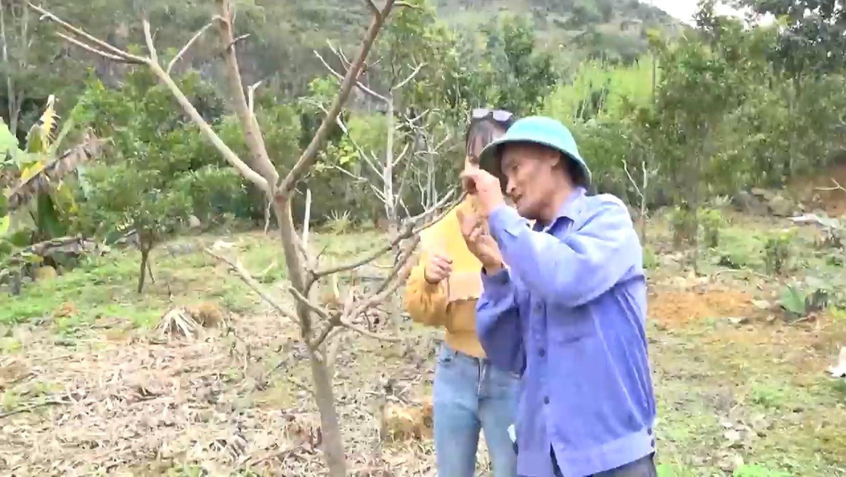 Yên Bái: Triển vọng từ mô hình trồng na ở huyện Văn Chấn - Ảnh 7.
