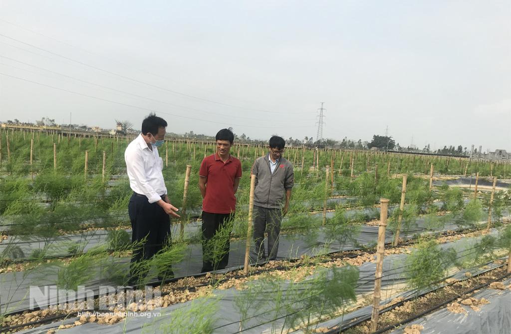 """Ninh Bình: """"Rau vua"""" là rau gì khiến ông nông dân này bỏ 1 tỷ tiền tiết kiệm suốt 20 năm trời ra để trồng? - Ảnh 1."""
