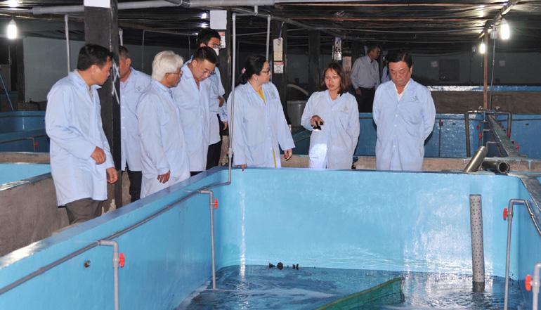 Đến tỉnh Phú Yên nuôi tôm hùm trên bờ - Ảnh 1.
