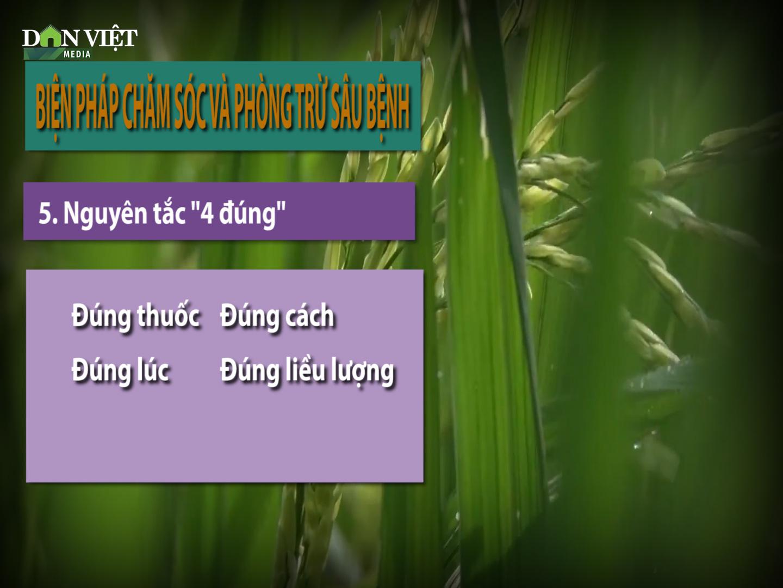 CẢNH BÁO: Thời tiết ấm, lúa xuân sinh trưởng nhanh, nguy cơ sâu bệnh cao  - Ảnh 4.