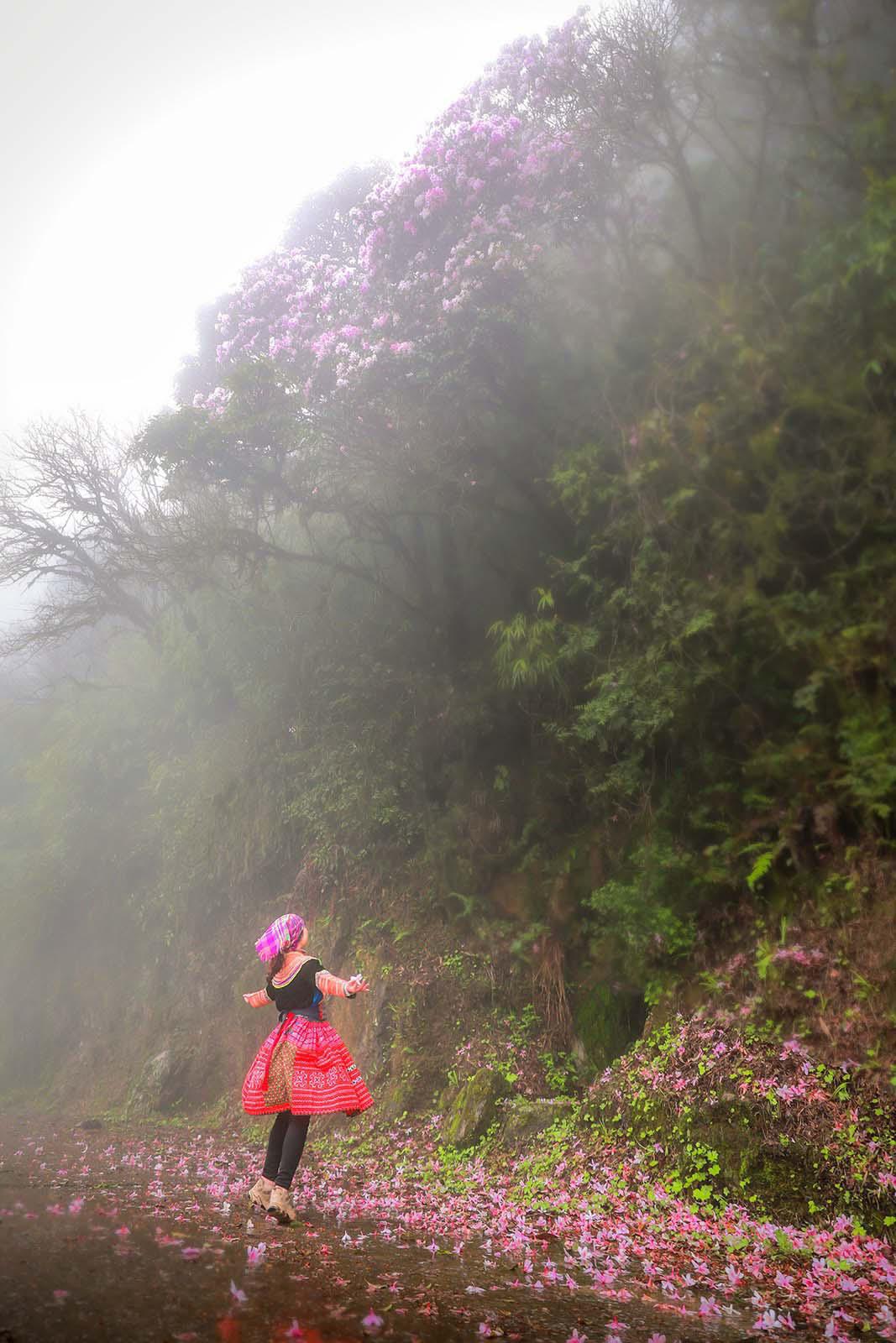 Cao Bằng: Mê mẩn sắc hoa Đỗ quyên cổ thụ rực rỡ trên đỉnh Phia Oắc - Ảnh 7.