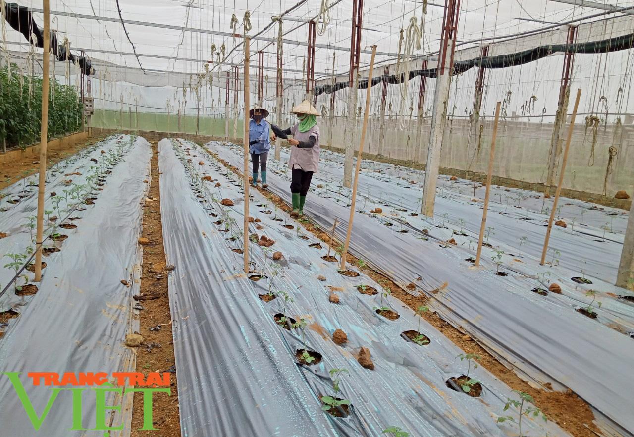 HTX Nông nghiệp Mường Tấc sản xuất nông nghiệp theo hướng hữu cơ - Ảnh 5.