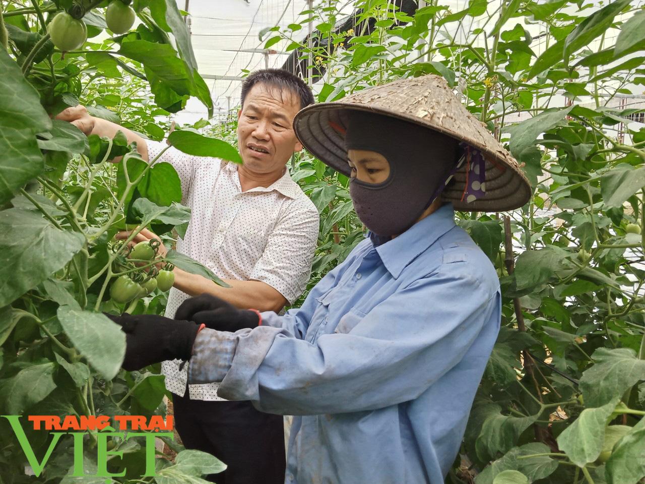 HTX Nông nghiệp Mường Tấc sản xuất nông nghiệp theo hướng hữu cơ - Ảnh 1.