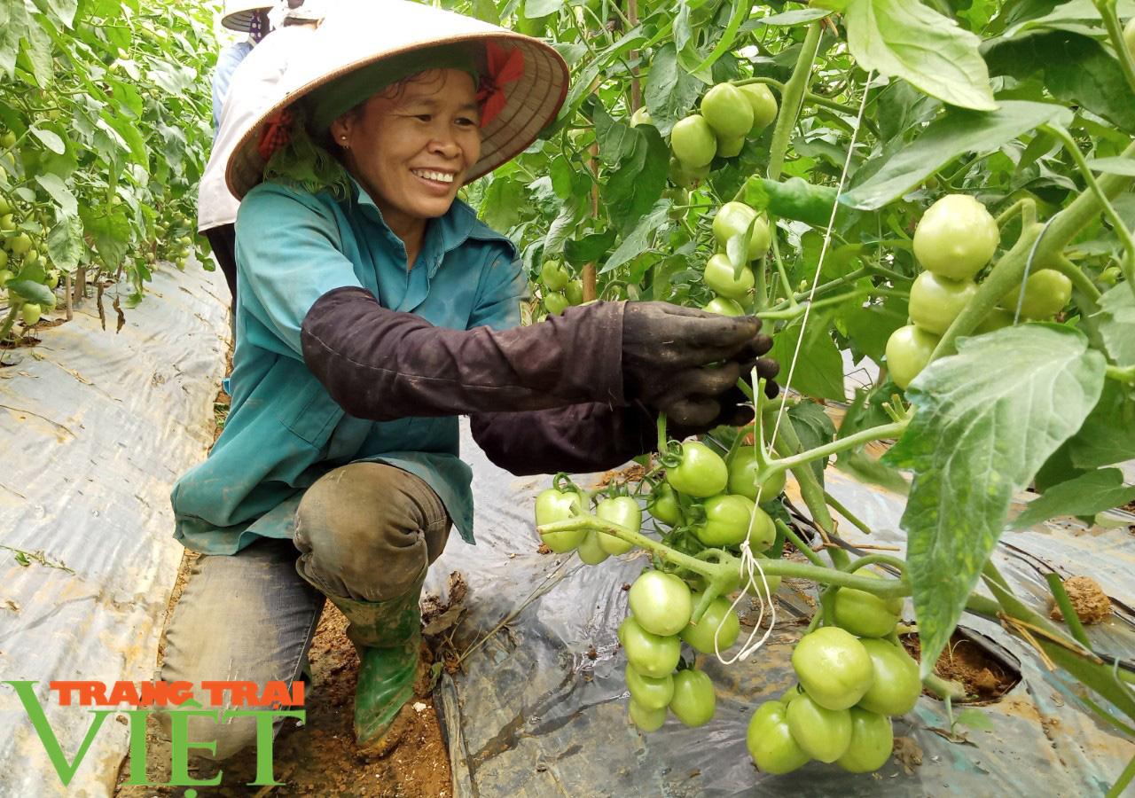HTX Nông nghiệp Mường Tấc sản xuất nông nghiệp theo hướng hữu cơ - Ảnh 3.