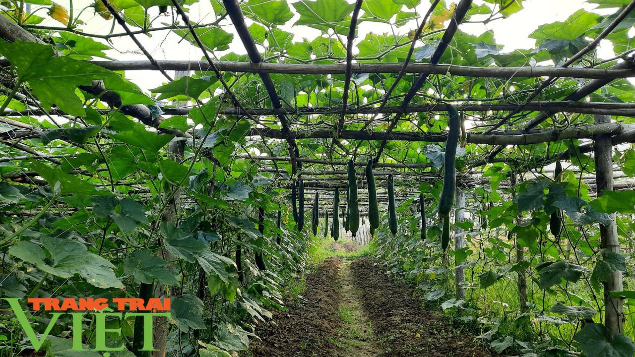 HTX Nông nghiệp Mường Tấc sản xuất nông nghiệp theo hướng hữu cơ - Ảnh 6.