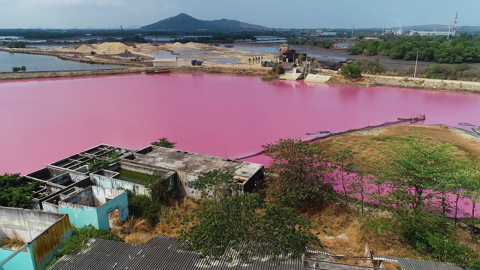 CLIP: Kinh hoàng hồ nước rộng lớn chuyển thành màu tím - Ảnh 5.