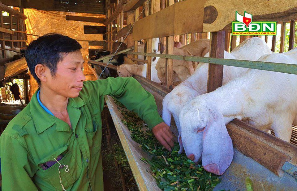 Đắk Nông: Nuôi loài thú tai dài quá mỏm, chỉ ăn rau, ăn lá, uống nước lã mà nông dân khá giả hẳn lên - Ảnh 1.