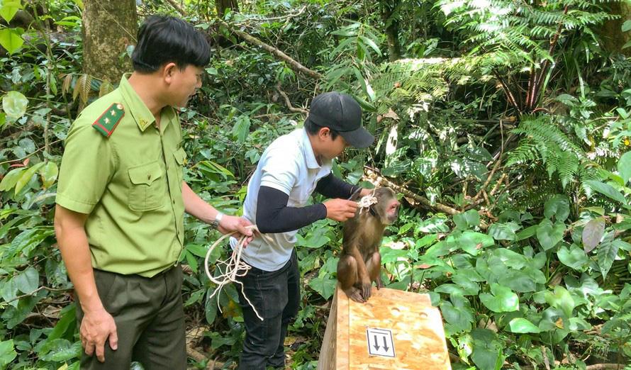 Bình Định: Thả cu li, khỉ quý hiếm…. về rừng tự nhiên - Ảnh 1.