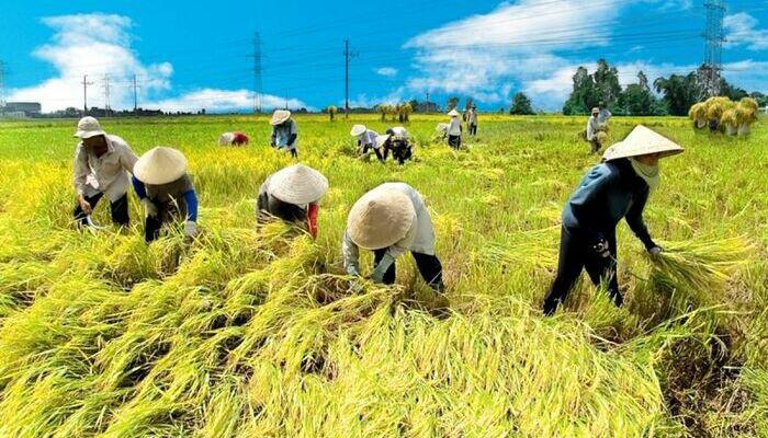 Điều kiện chuyển nhượng đất trồng lúa năm 2021 - Ảnh 1.