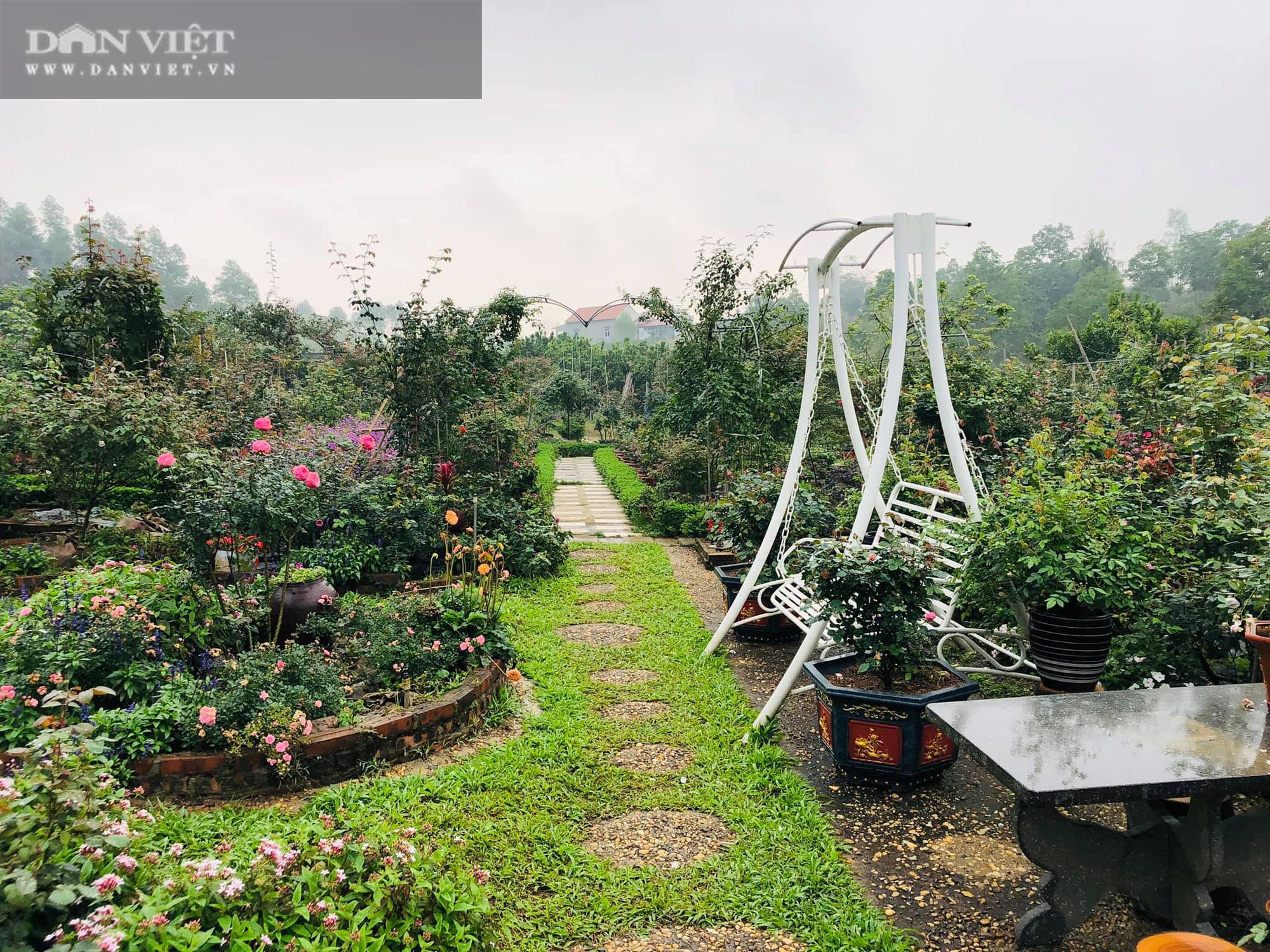 Phú Thọ: Học hết cấp 3, 9X về trồng hoa hồng không những có vườn đẹp còn thu 50 triệu đồng/tháng - Ảnh 5.