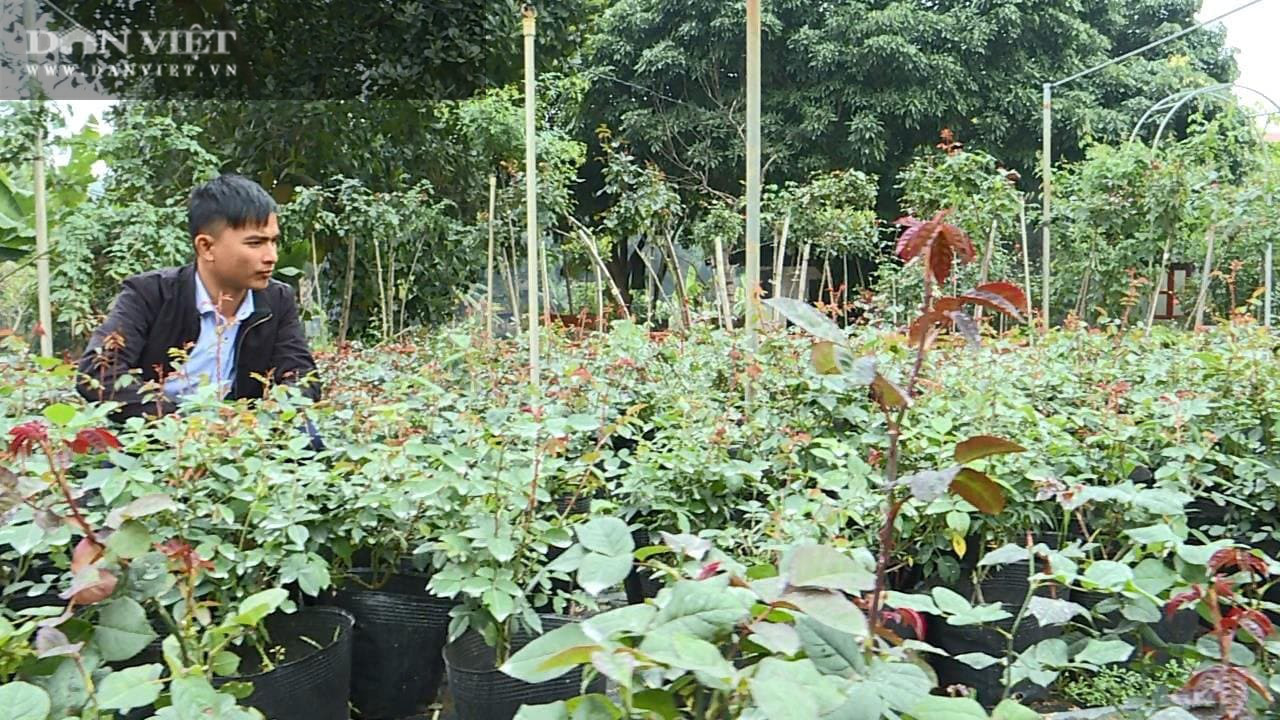 Phú Thọ: Học hết cấp 3, 9X về trồng hoa hồng không những có vườn đẹp còn thu 50 triệu đồng/tháng - Ảnh 2.