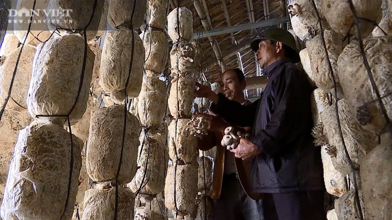 """Phú Thọ: Kiếm 4 – 5 triệu mỗi ngày nhờ cây """"siêu dinh dưỡng"""" mọc ra từ rơm mục mùn cưa - Ảnh 2."""