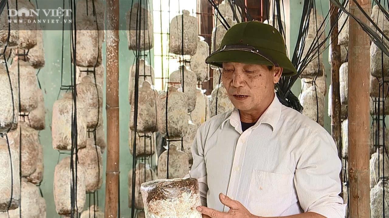 """Phú Thọ: Kiếm 4 – 5 triệu mỗi ngày nhờ cây """"siêu dinh dưỡng"""" mọc ra từ rơm mục mùn cưa - Ảnh 1."""