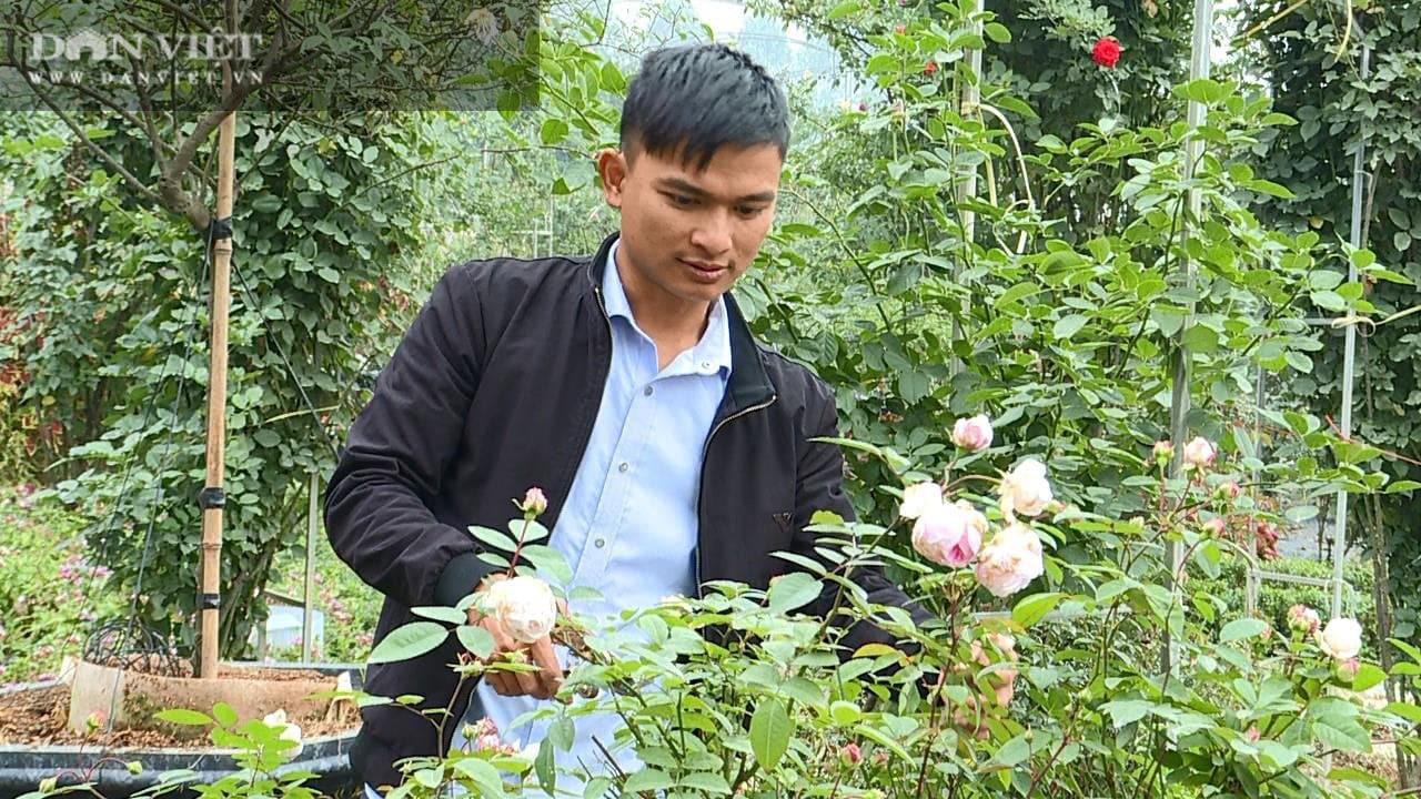 Phú Thọ: Học hết cấp 3, 9X về trồng hoa hồng không những có vườn đẹp còn thu 50 triệu đồng/tháng - Ảnh 3.