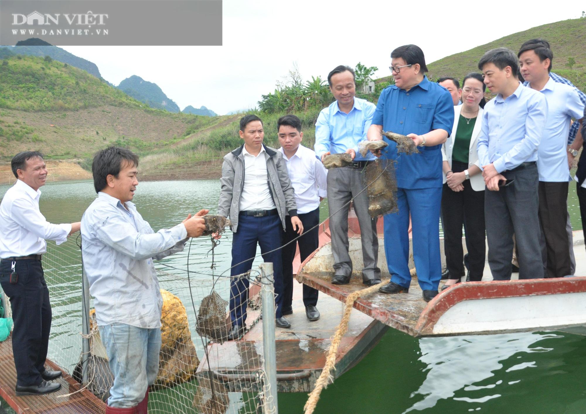 """Nơi nông dân biết """"ép"""" sông nhả ngọc, thuần phục loài cá đặc sản thu chục tỷ đồng/năm - Ảnh 1."""