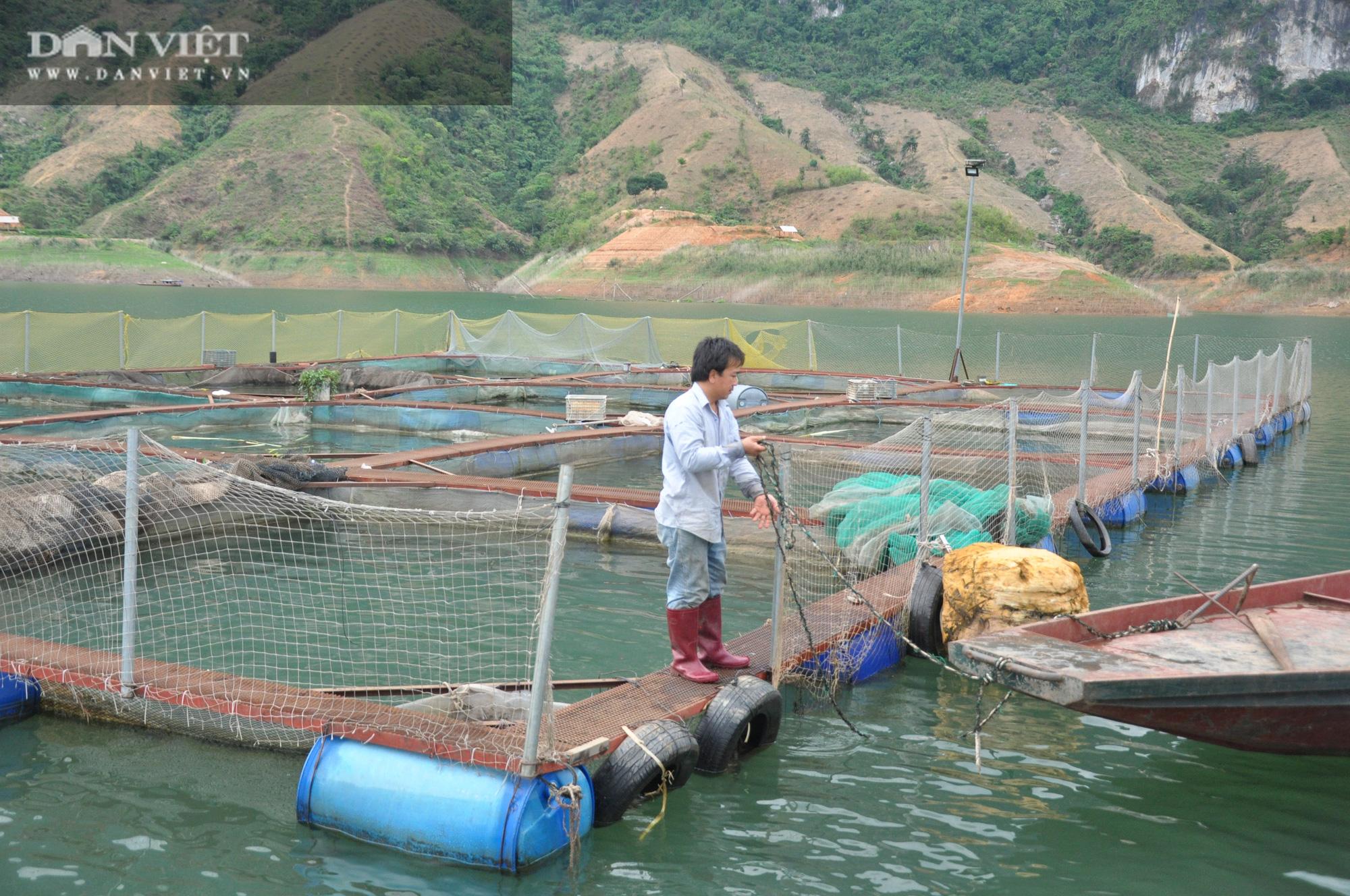 """Nơi nông dân biết """"ép"""" sông nhả ngọc, thuần phục loài cá đặc sản thu chục tỷ đồng/năm - Ảnh 3."""