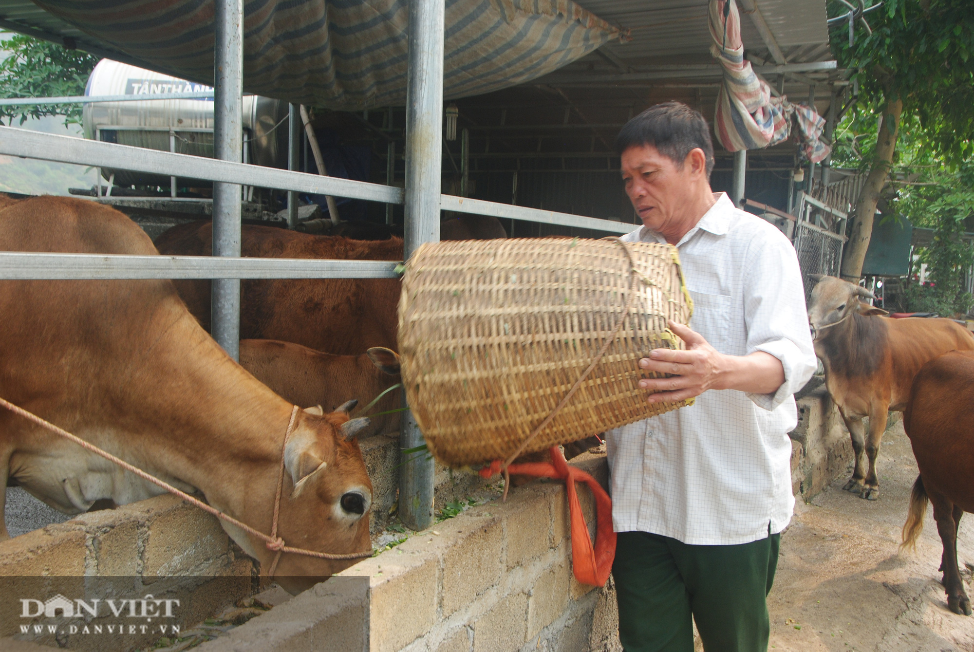 Biến bò gầy thành bò béo, cựu chiến binh kiếm hơn nửa tỷ - Ảnh 4.