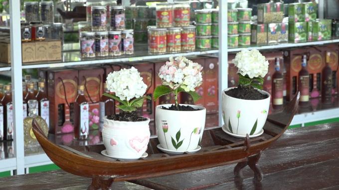 Độc, lạ giống hoa cẩm tú cầu mini - Ảnh 2.