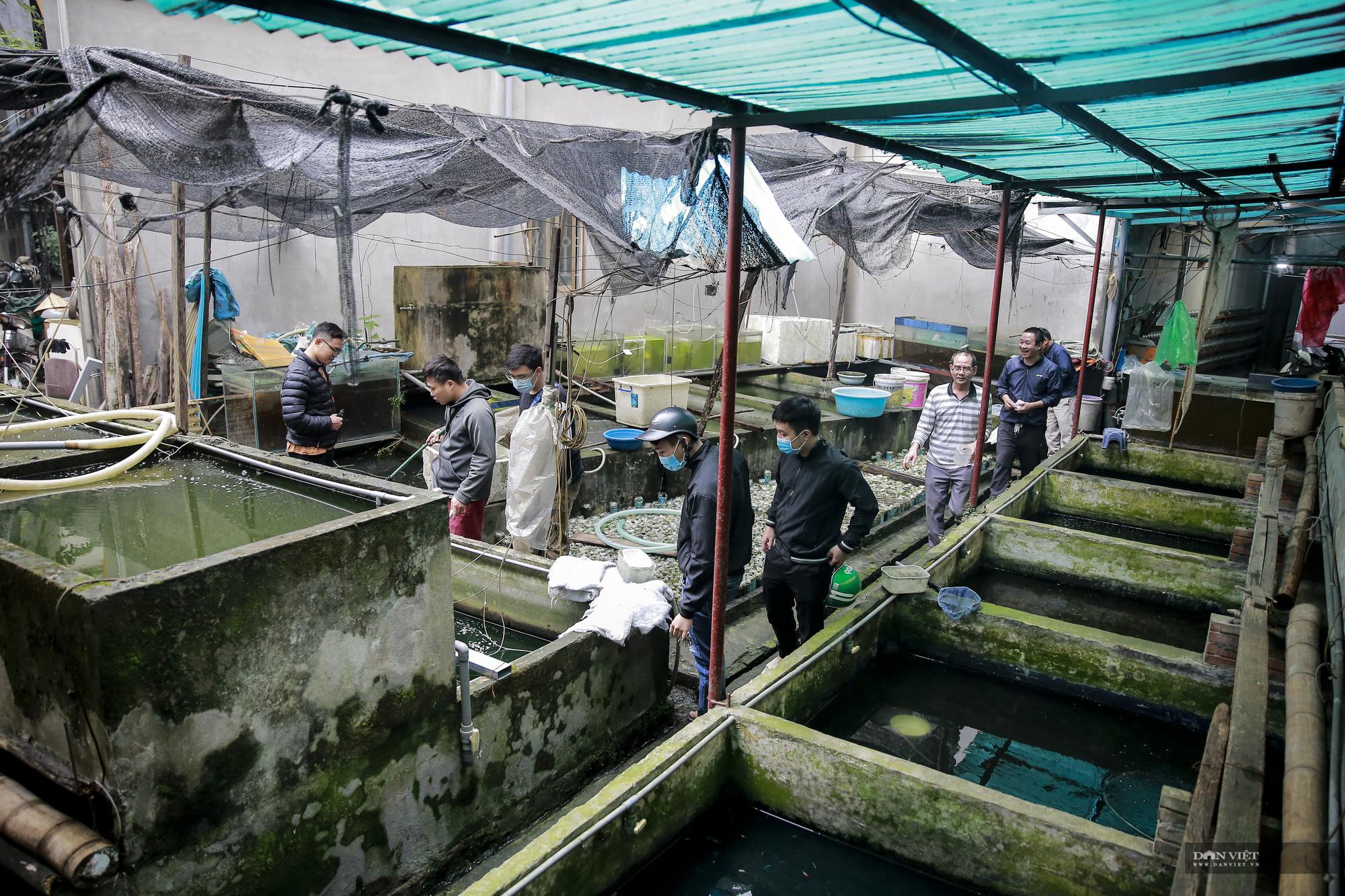 """Lão nông thành triệu phú nhờ lai tạo giống cá được ví như những """"chiến binh Samurai""""  - Ảnh 1."""