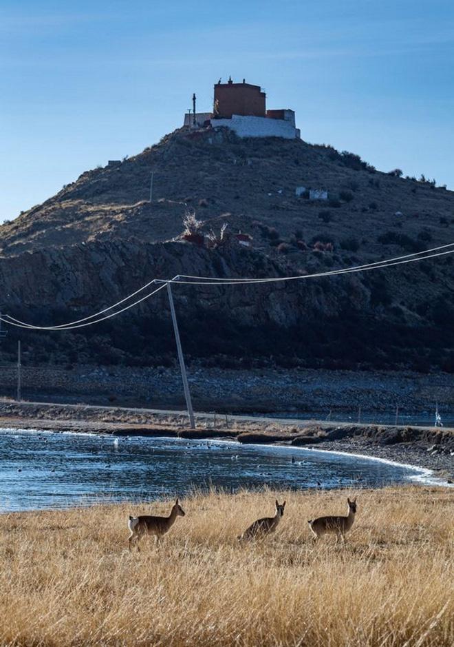 Ngôi chùa bí ẩn nằm giữa hồ Thánh, chỉ có 1 nhà sư ở Tây Tạng - Ảnh 3.