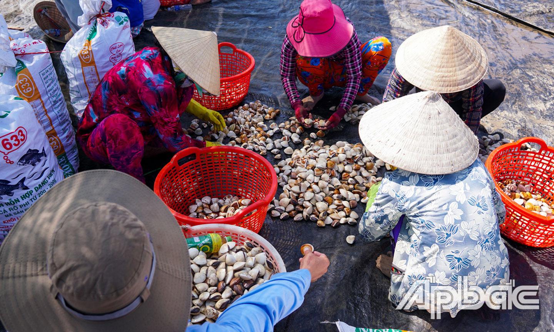 Tiền Giang: Ốc hương ăn 10 tấn nghêu ở biển Tân Thành trong tháng 2 và tháng 3 vừa qua, diệt ốc khó hay dễ? - Ảnh 2.